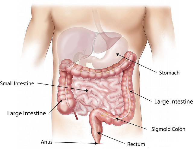 colon irritable colon spastique
